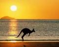 Австралия - удивительный материк